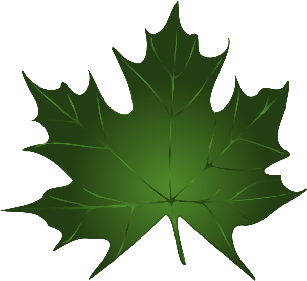 Maple clipart large. Green leaf clip art