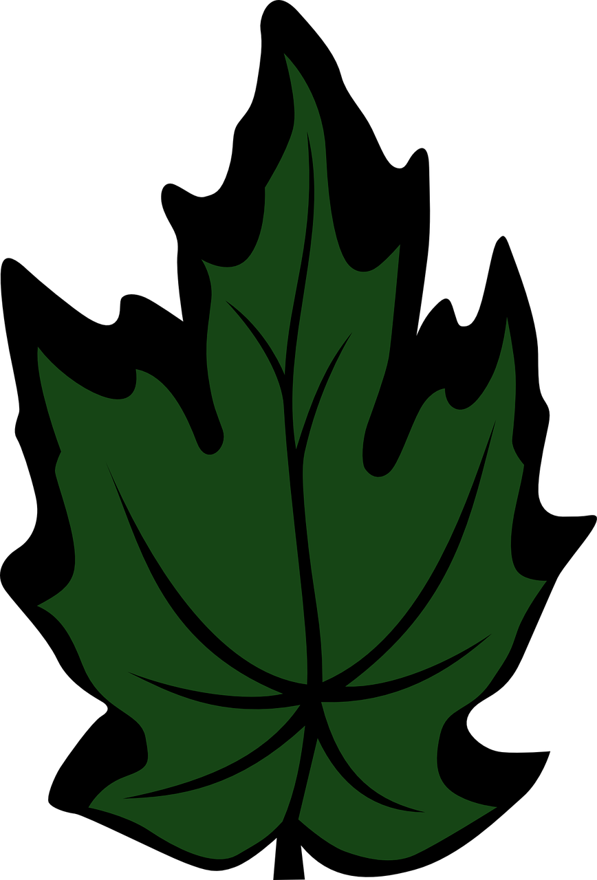Maple vector. Leaf green free graphics
