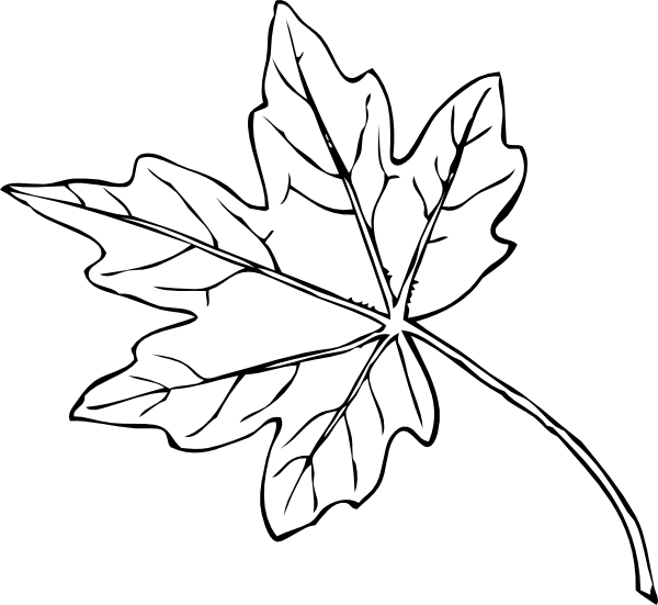 Maple vector. Leaf clip art at