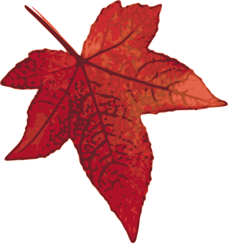 Free red leaf graphic. Maple vector picture freeuse