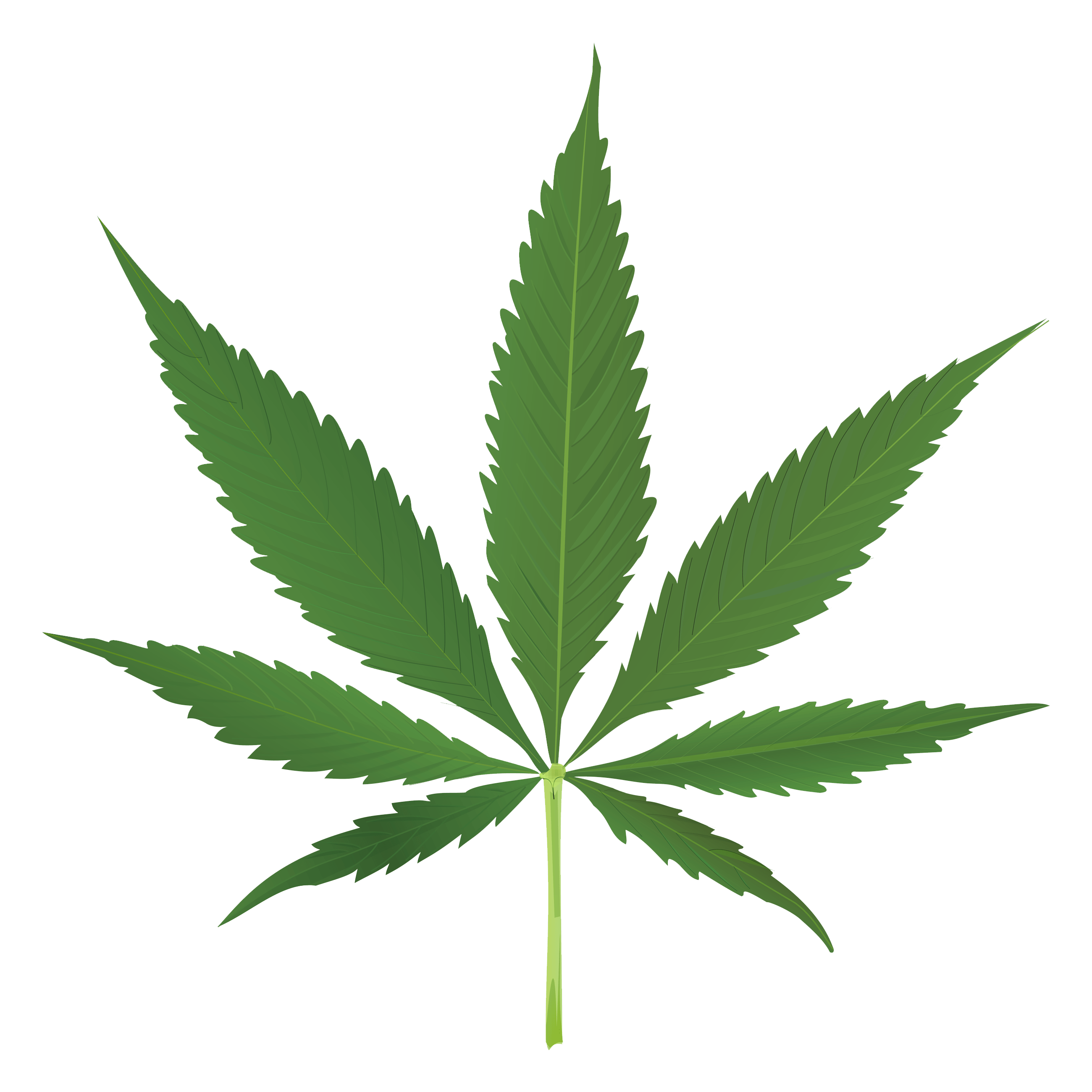 Cartoon weed leaf png. Thug life transparent stickpng
