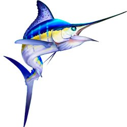 Marlin long fish