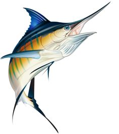 marlin clipart tuna