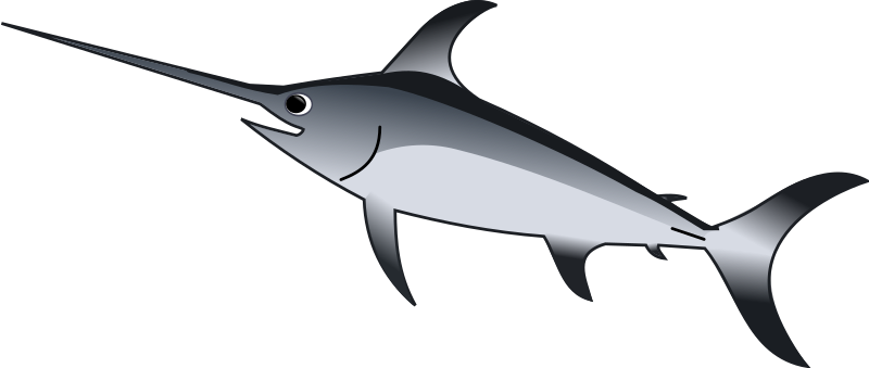Marlin clipart xiphias. Gladius medium image png
