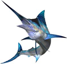 Marlin clipart xiphias. Pinterest blue travel to