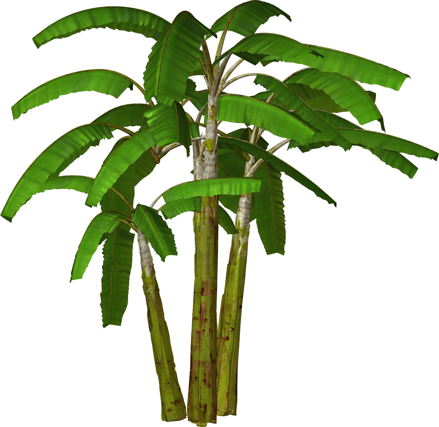 Banana tree png. Free plant cliparts download