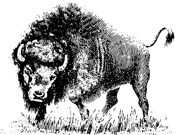 Mascot vector bison. Buffalo line drawings clip
