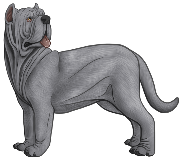 Mastiff drawing pencil. How to draw a