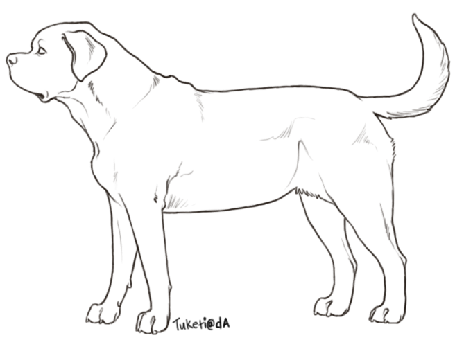 mastiff drawing english