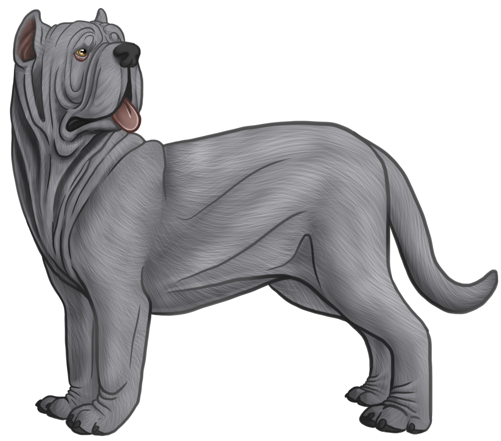 mastiff drawing domestic dog