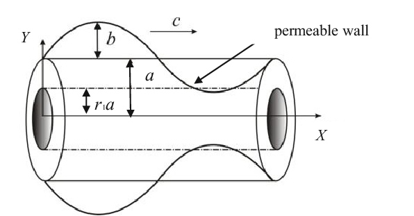 Mathematical drawing fluid. Geometry of peristaltic bile