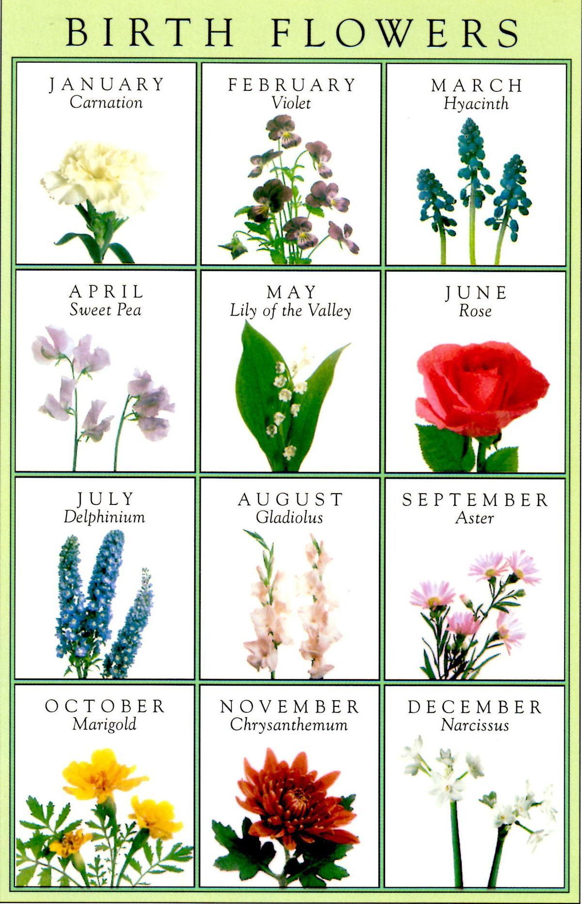 May clipart june flower. Lily of the valley
