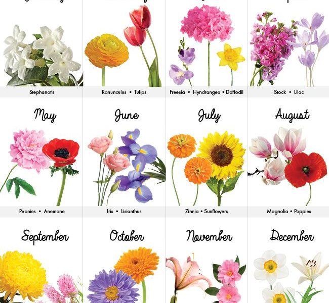 What Is The Birth Flower For Month Of March Flowers Healthy Birth Month Flowers Tattoo Designs