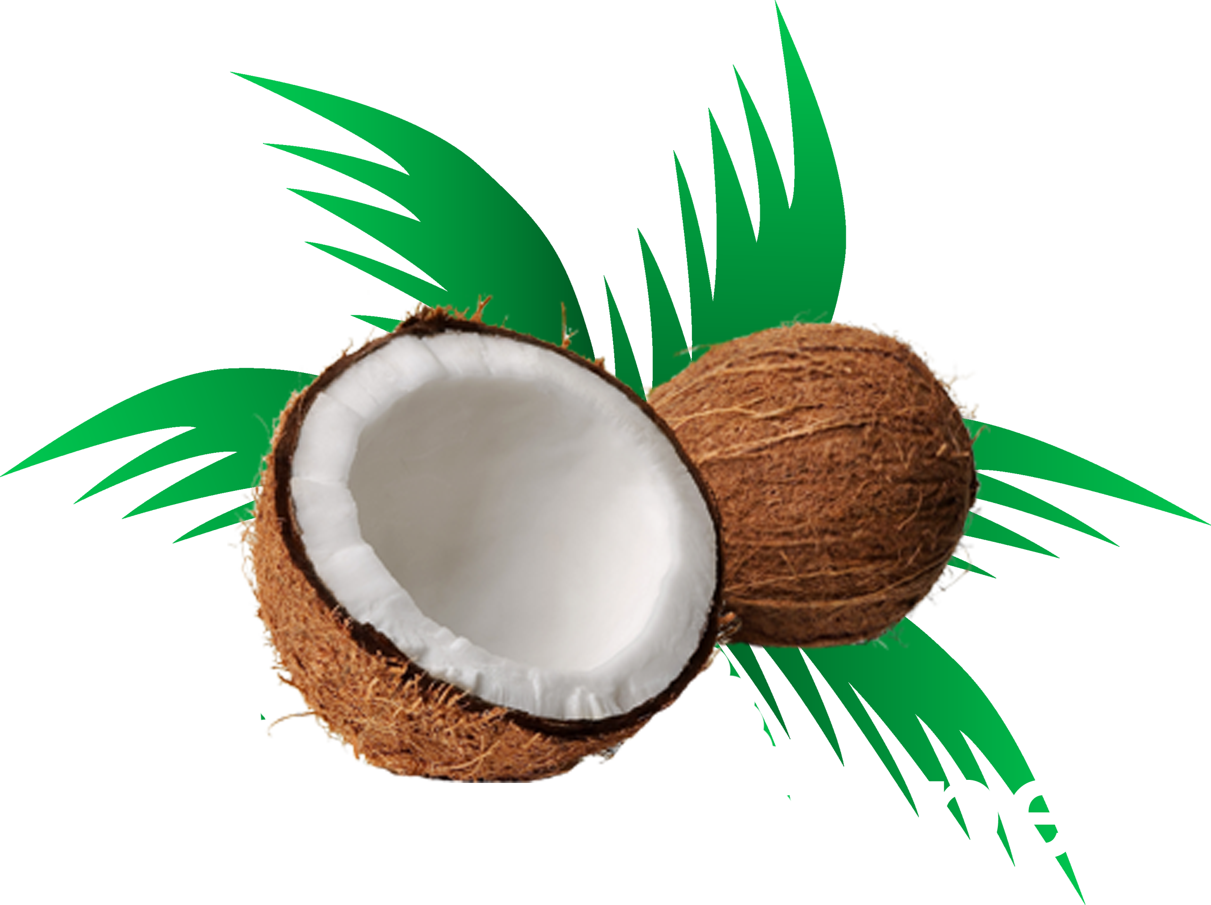Medium coconut. Clipart husk