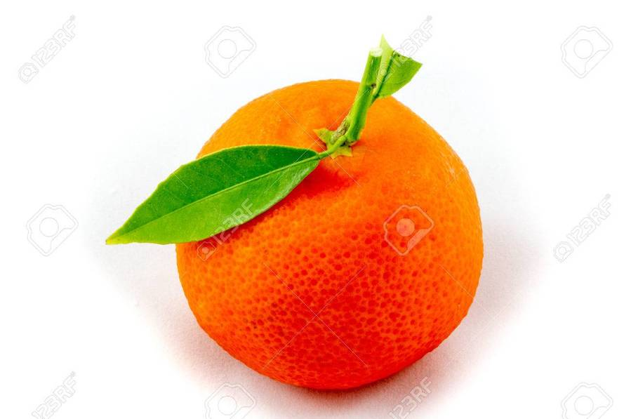 Medium mandarin. Download fruit clipart clementine