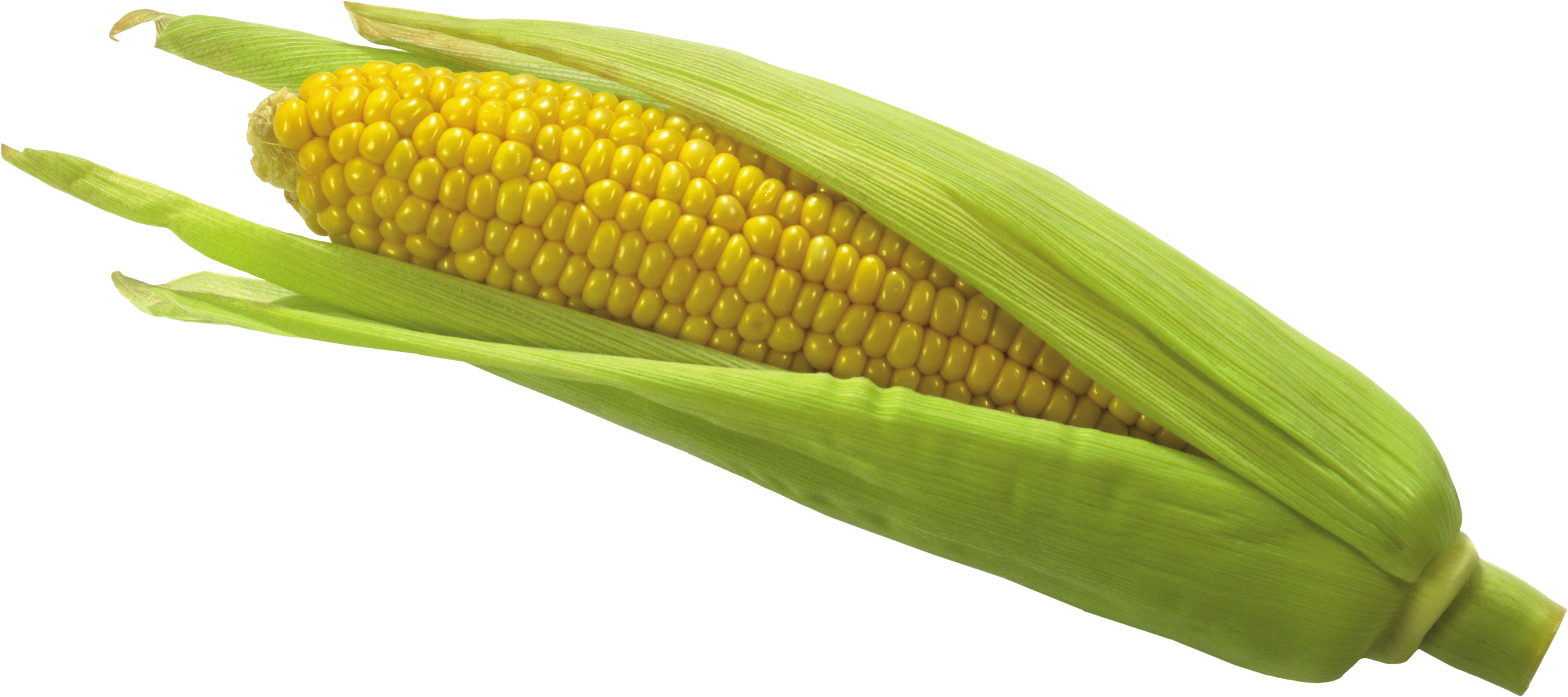 Mexican corn on the cob png. Image