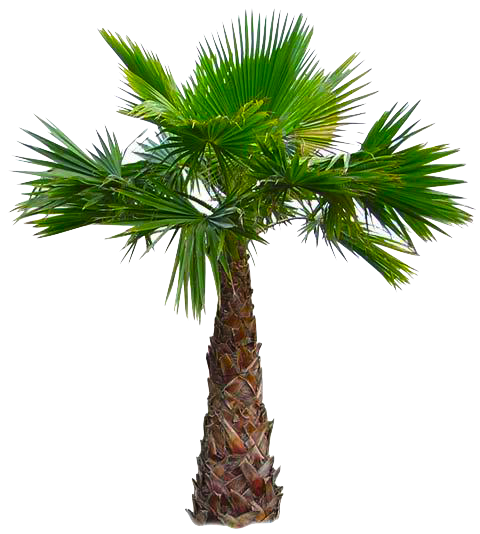 Paradise restaurant west indianamerican. Mexican fan palm png svg black and white download