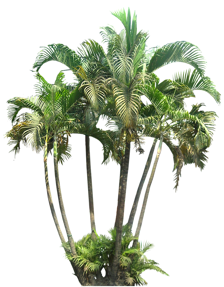 Tropical plants png images. A collection of and