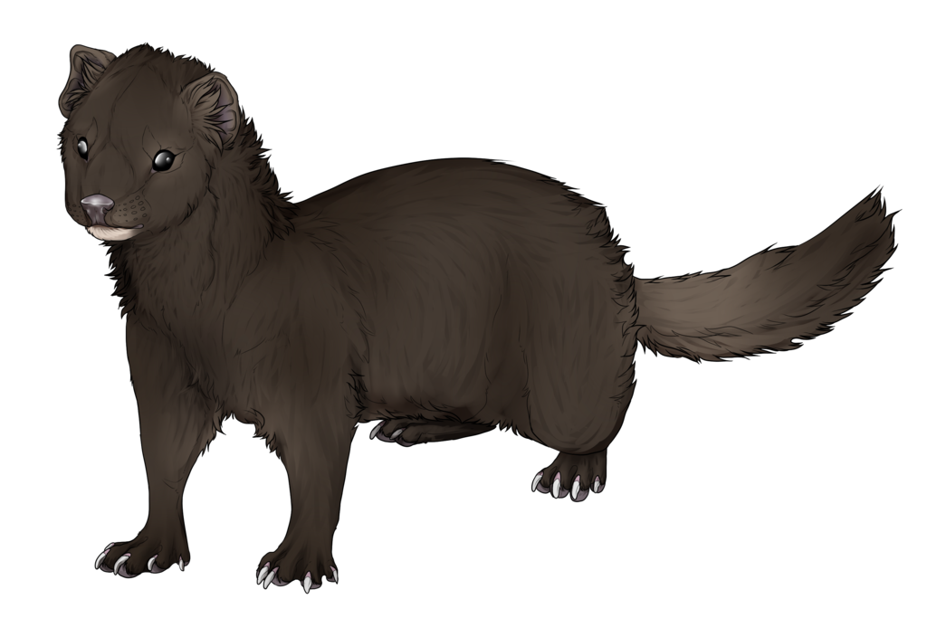 mink drawing otter