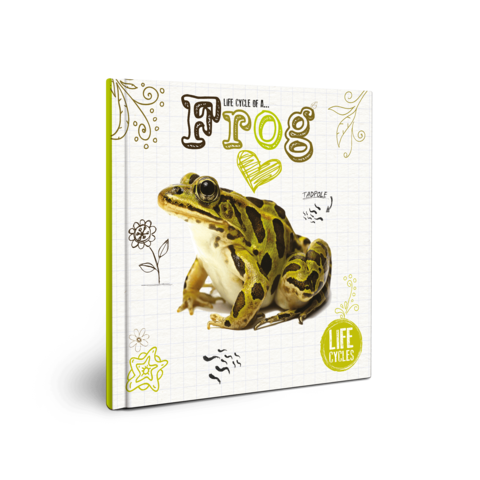 Mink drawing life cycle. Frog booklife of a
