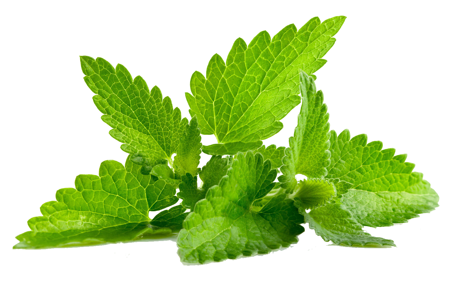 mint leaf png
