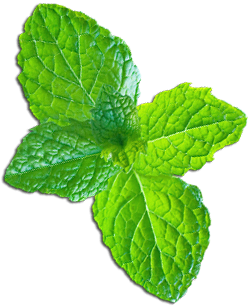 Download free image with. Mint background png image transparent download