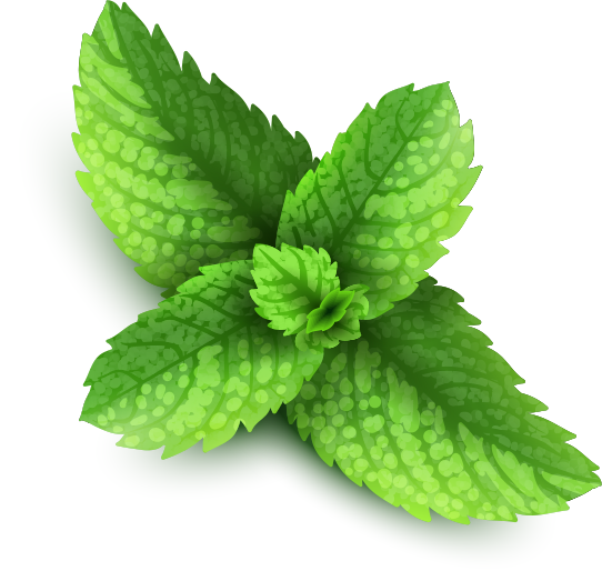 Mint background png. Pepermint image purepng free