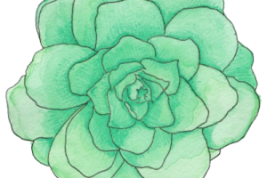 Mint flower png. Green image related wallpapers