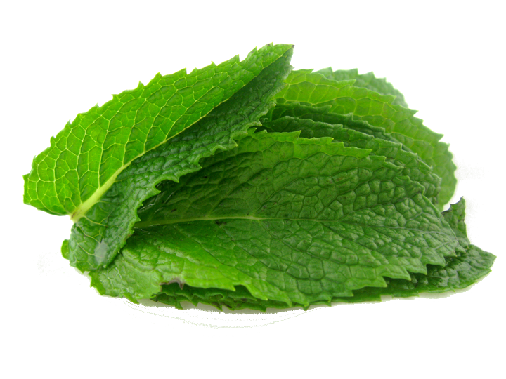 Mint leaves png. Pepermint images free download