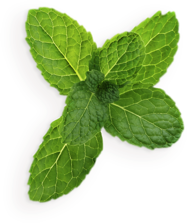 Mint leaves png. Download hd pepermint transparent