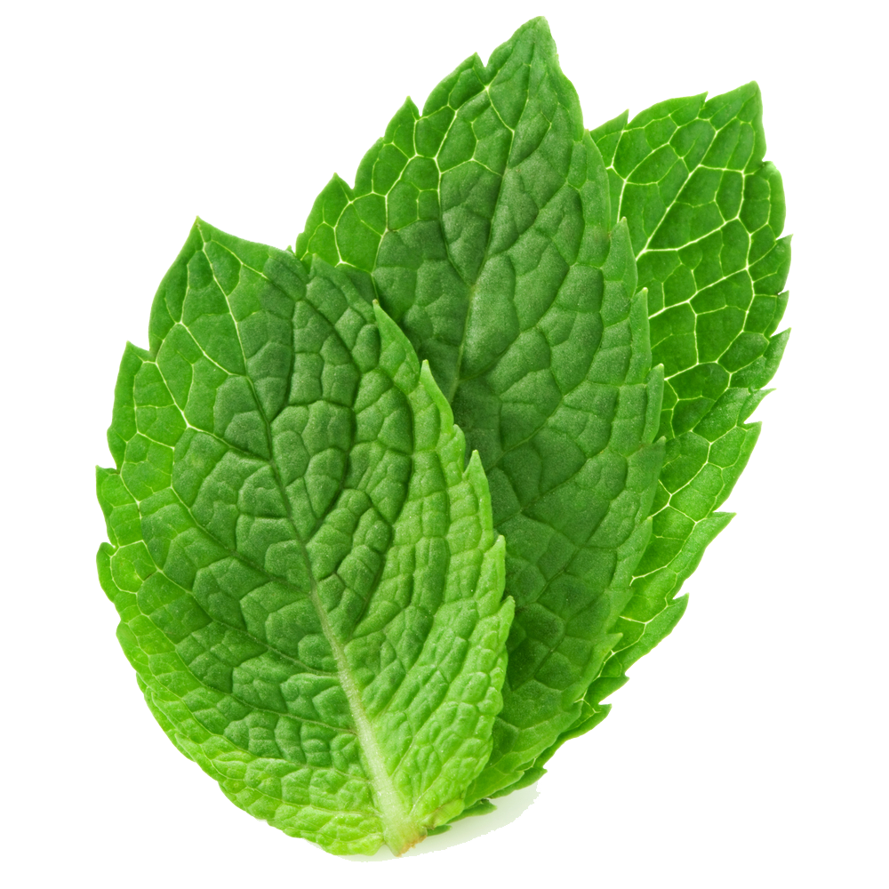 Mint leaf png. Pepermint images free download