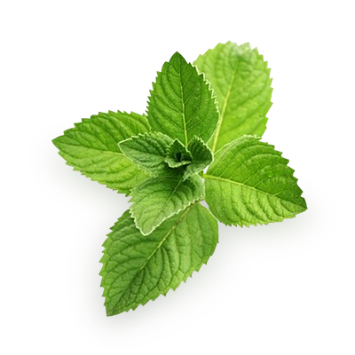 Pepermint images free download. Mint png clip art freeuse stock