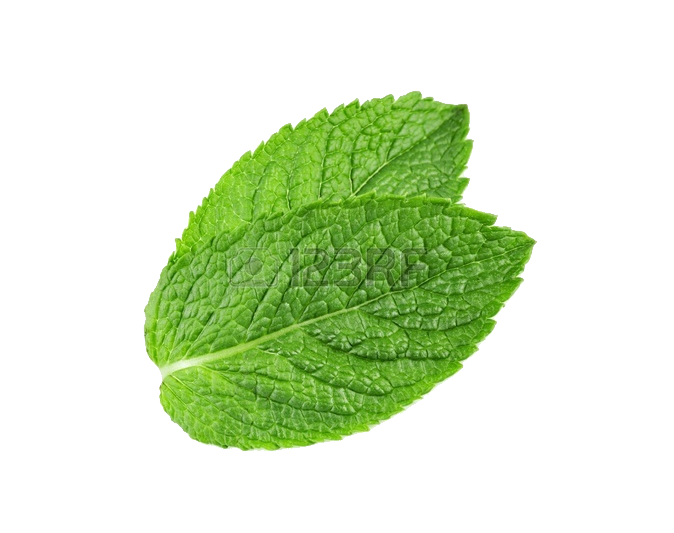 Mint leaves png. Pepermint