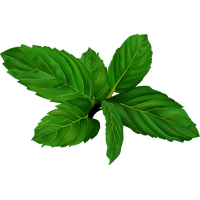 Mint png. Download free photo images