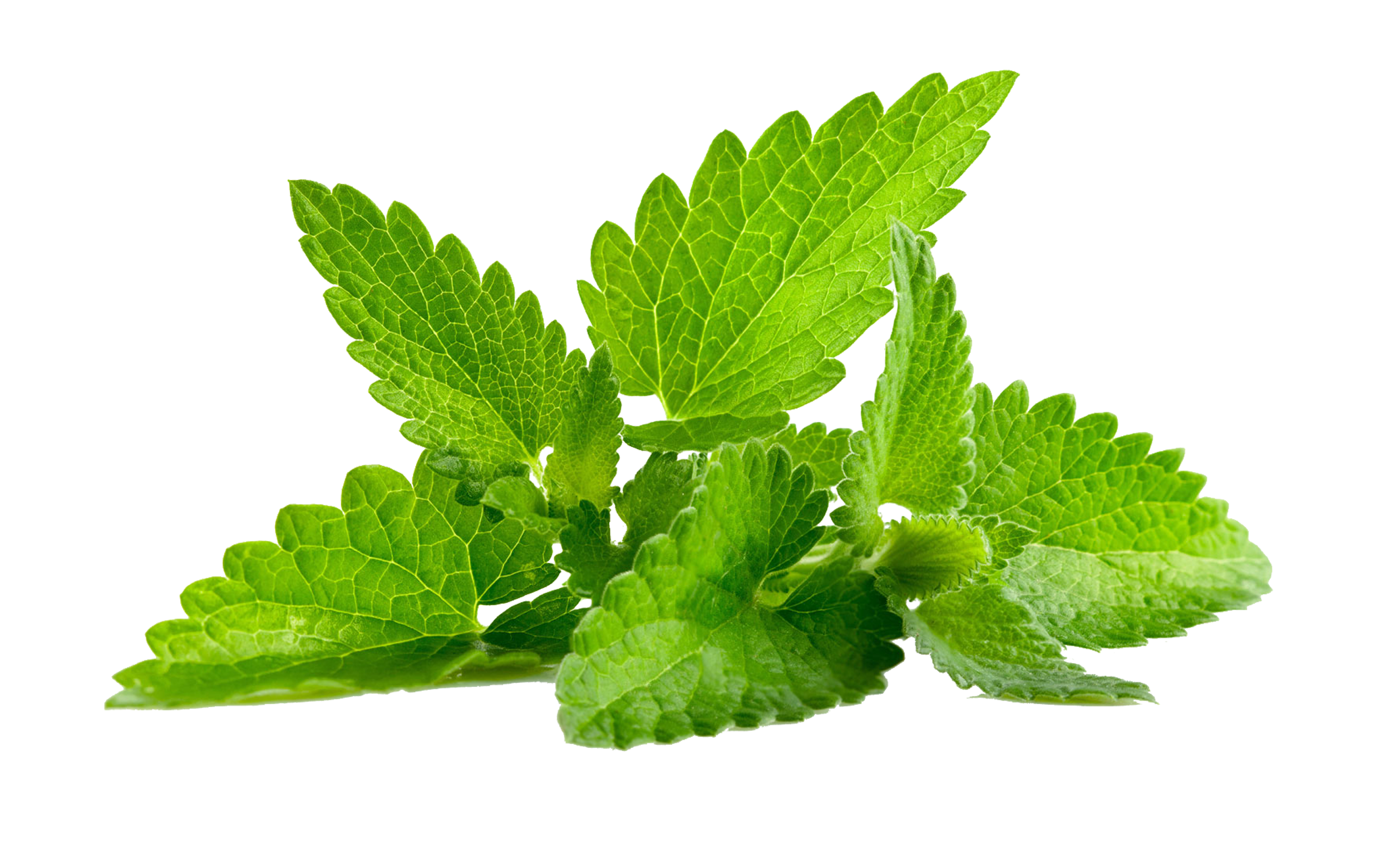 Mint png. Images all