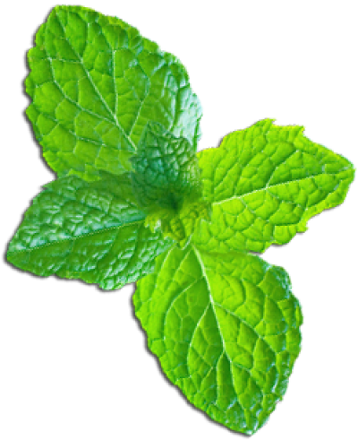 Mint png. Dlpng download image with