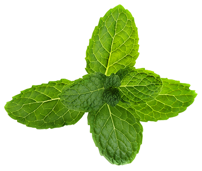 Mint png. Pepermint images free download