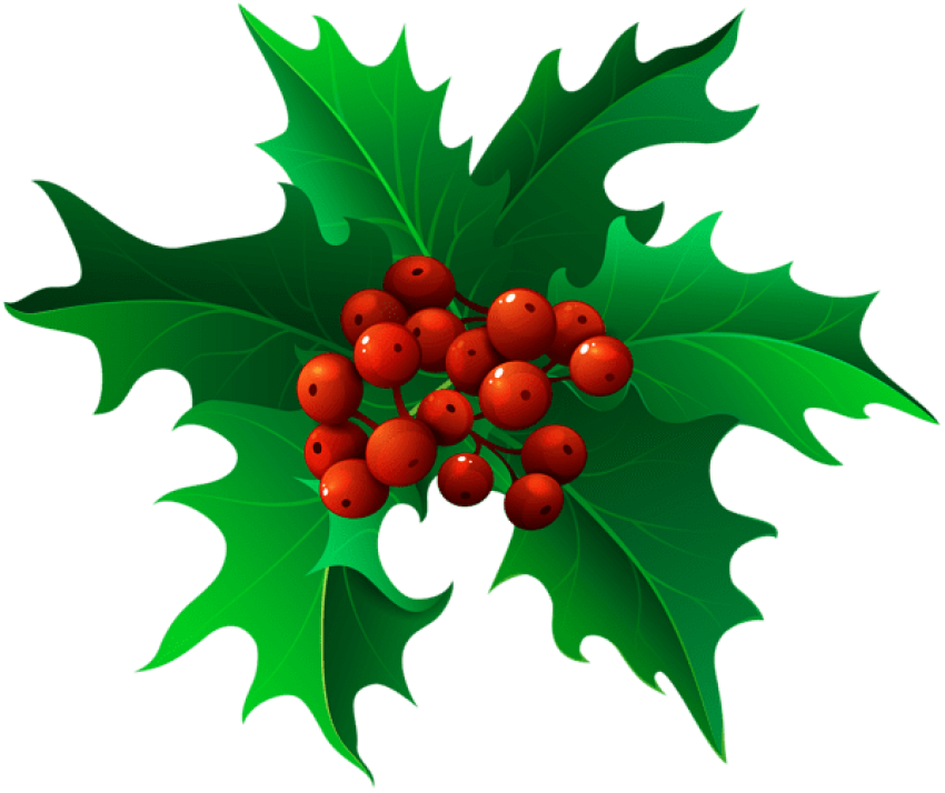 Transparent holly green. Christmas mistletoe png free