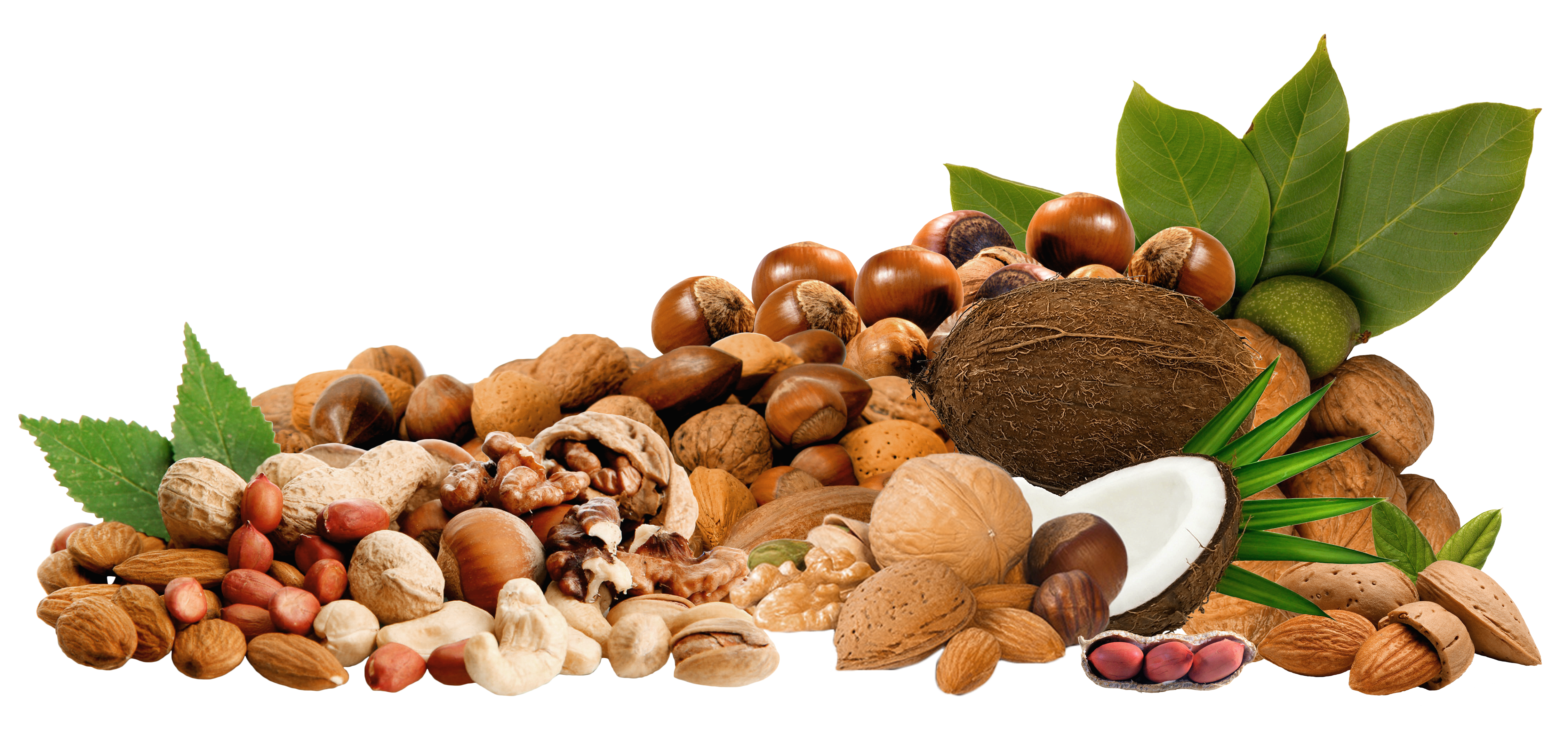 Nuts transparent. Png clipar picture gallery