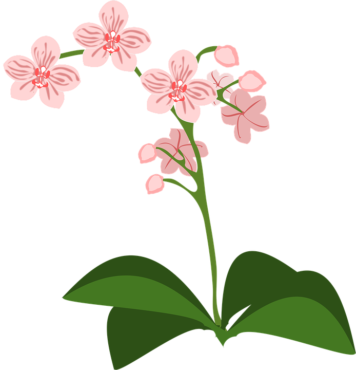 Moana clipart flower crown. Free image on pixabay