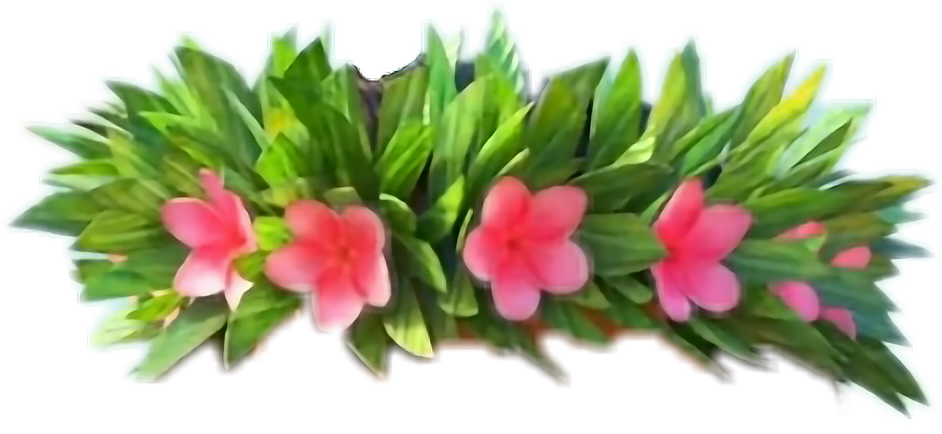Moana clipart flower crown. Flowercrown freetoedit report abuse