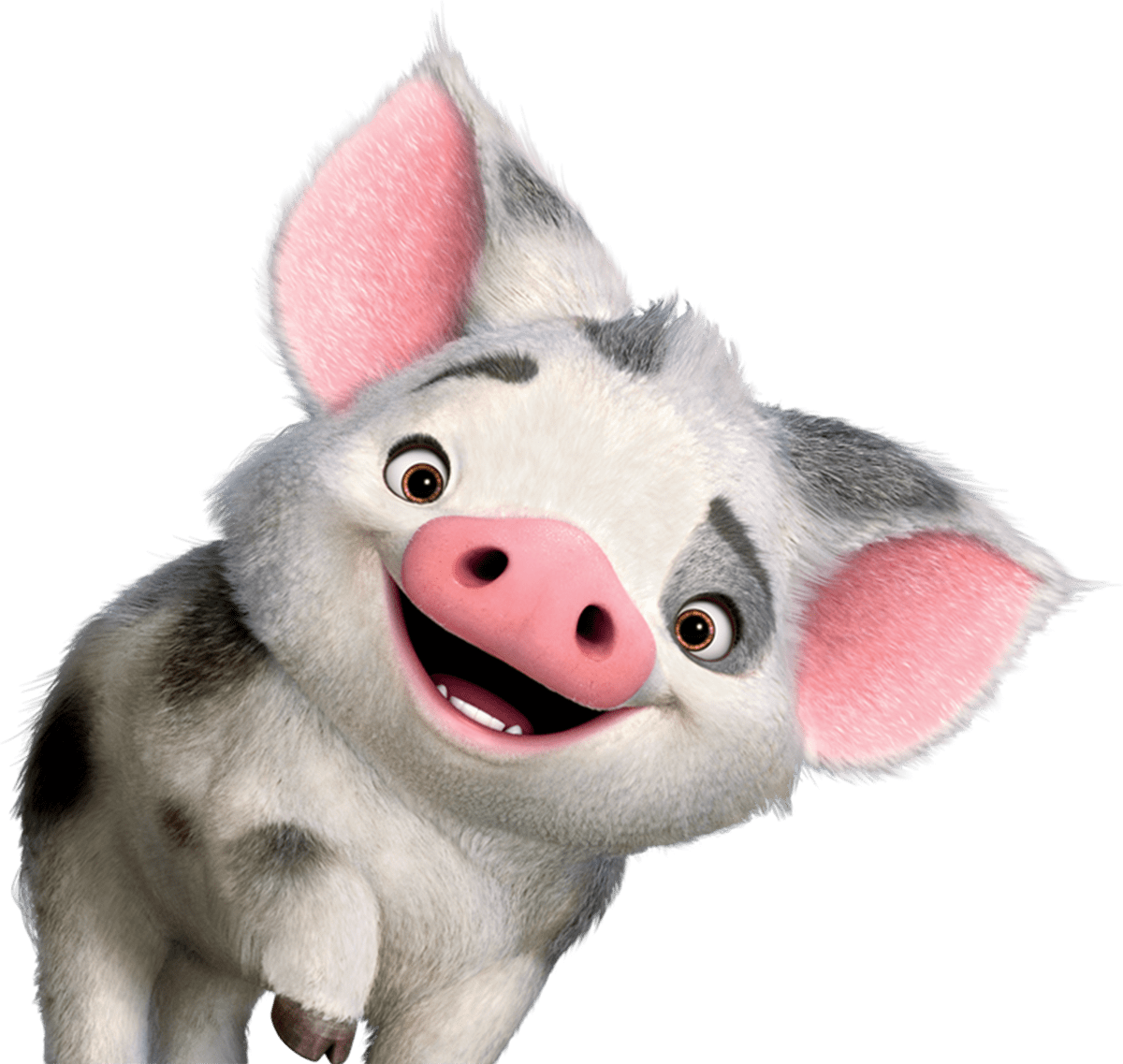 Moana clipart pua. Transparent png stickpng