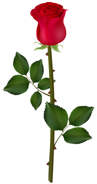 Flower .png. Red rose png image