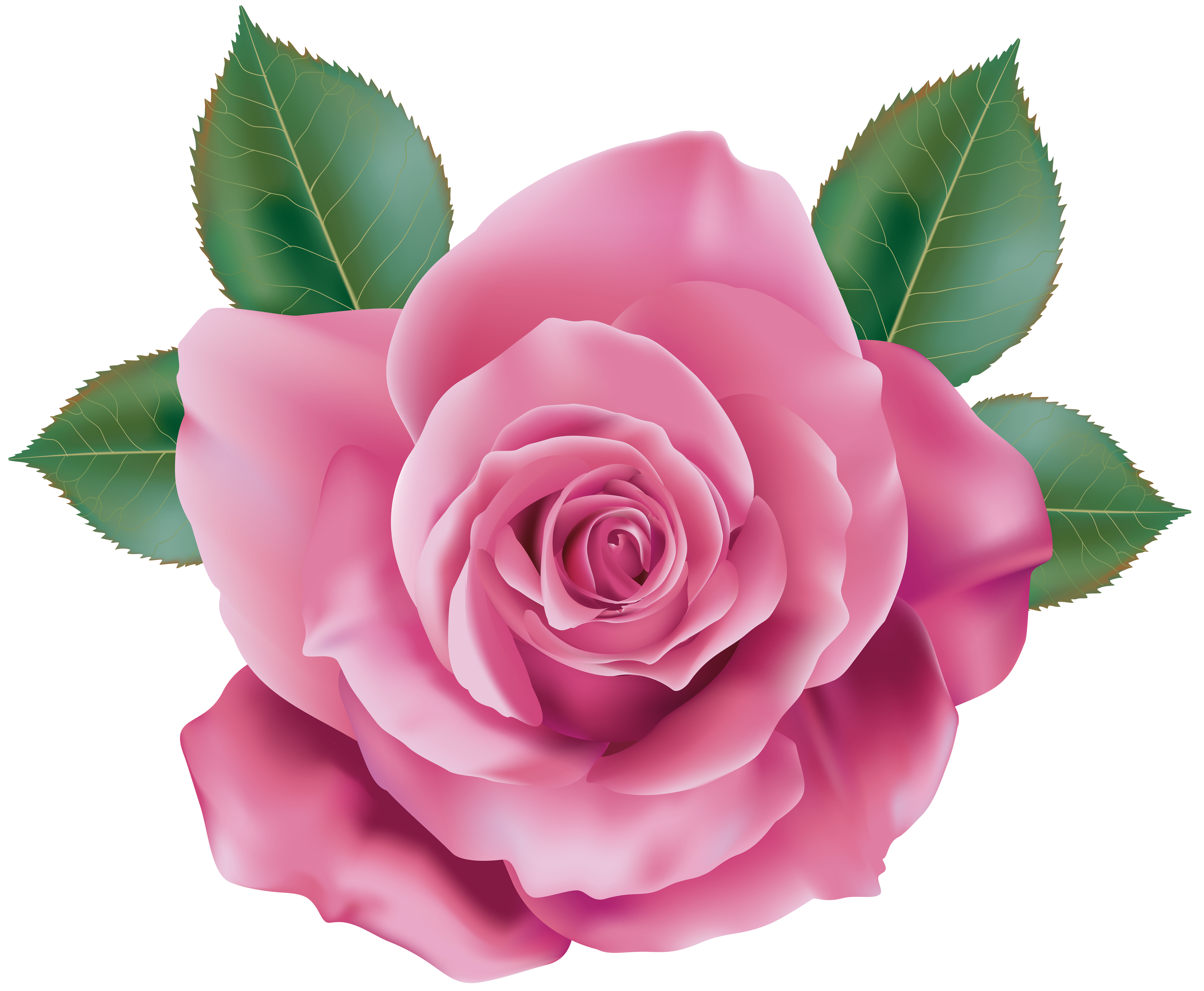 Pink transparent png clip. 3 clipart rose picture royalty free