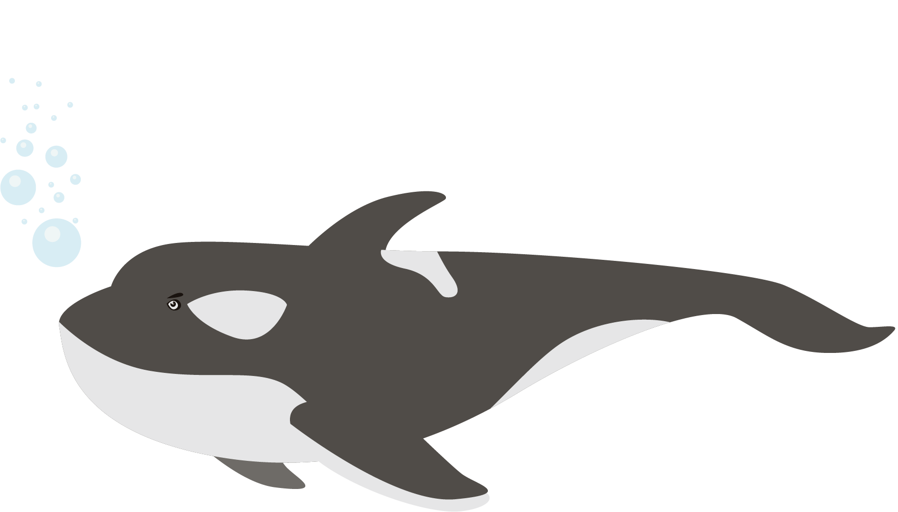 Transparent whale chicken. Moby dick dolphin beluga