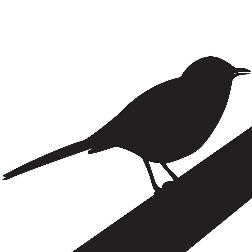 Northern overview all about. Mockingbird transparent clip art royalty free download