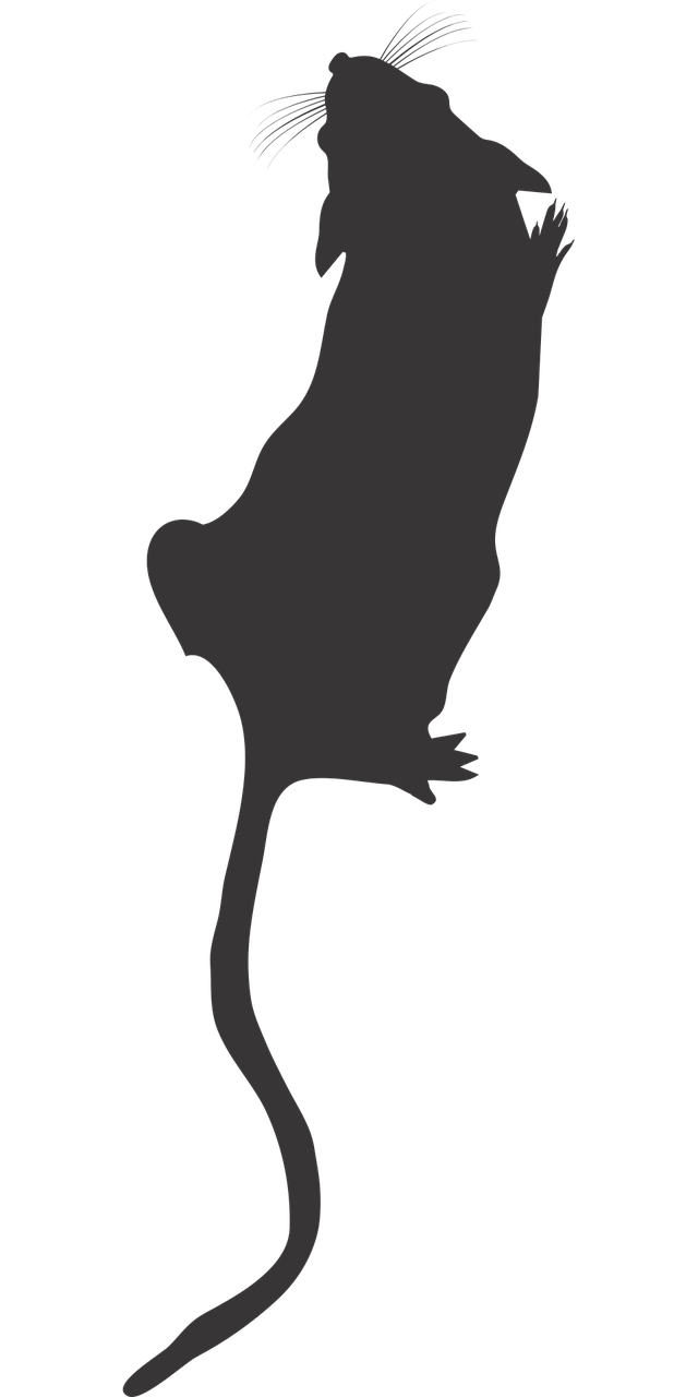Vector lake top view. Lab mouse silhouette icon