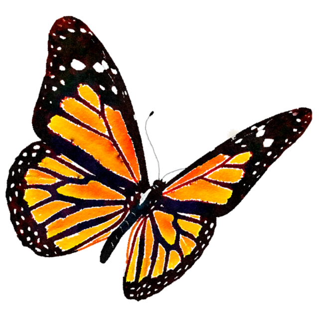 monarch butterfly png