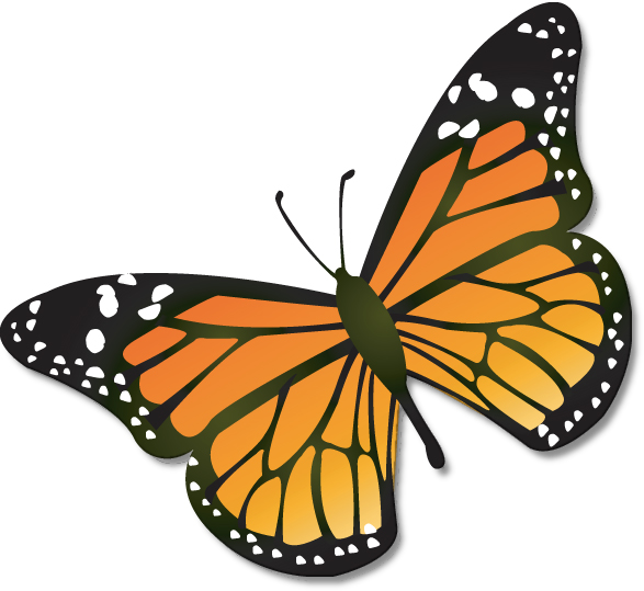 monarch butterflies png