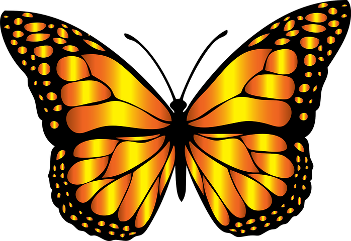 Monarch clipart in flight. Animal butterfly chromatic flying